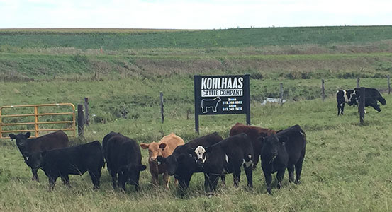 Kohlhaas Cattle Co  - A quality Show Cattle Program in Lu